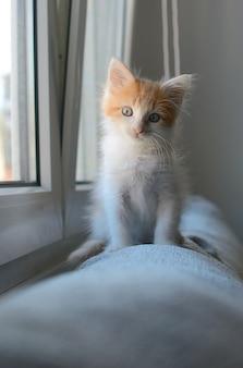 Foto vertical de um gatinho doméstico fofo, branco e laranja, sentado perto de uma janela