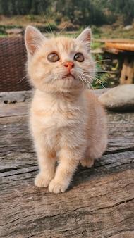 Foto vertical de um gatinho ruivo fofo olhando para cima em uma mesa de madeira
