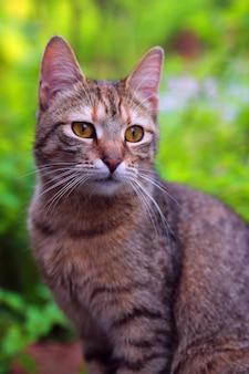 Foto vertical de um gato com bokeh