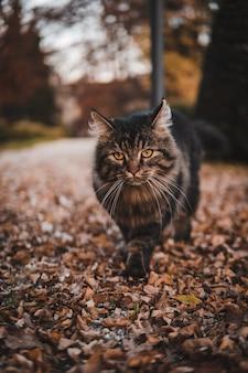 Foto vertical de um gato malhado caminhando no parque coberto de folhagens de outono