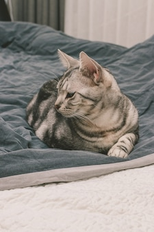 Foto vertical de um gato malhado cinza deitado em uma cama