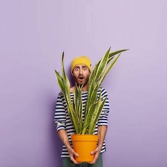 Foto vertical de um homem branco assustado segurando uma grande planta verde de interior em um vaso, chocado com muito trabalho na floricultura, mantém a boca bem aberta e usa roupas listradas