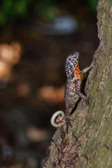 Foto vertical de um lagarto fofo