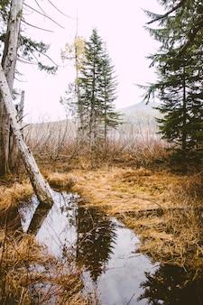 Foto vertical de um lago com o reflexo de árvores