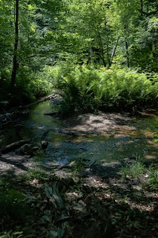 Foto vertical de um lago com samambaias no meio da floresta