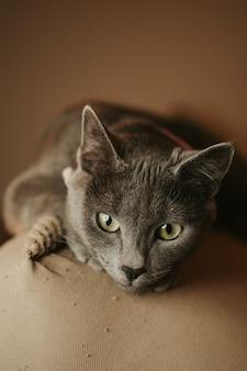 Foto vertical de um lindo gato cinza deitado no sofá
