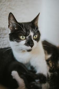 Foto vertical de um lindo gato preto e branco de olhos verdes