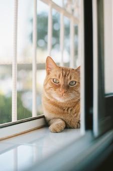 Foto vertical de um lindo gato ruivo deitado perto da janela