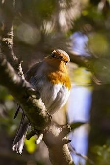 Foto vertical de um lindo pássaro robin europeu
