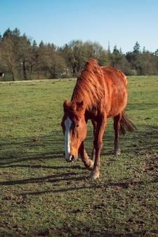 Foto vertical de um magnífico cavalo marrom em um campo coberto de grama cercado por árvores