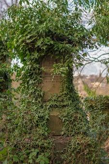 Foto vertical de um memorial feito de pedra coberto por galhos de árvores no parque