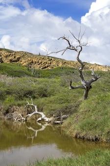 Foto vertical de um pântano com vegetação na venezuela durante o dia