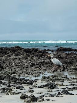 Foto vertical de um pássaro à beira-mar