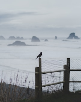 Foto vertical de um pássaro em cima de uma cerca com um mar turvo