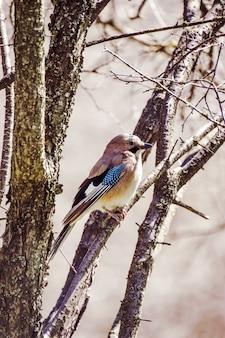 Foto vertical de um pássaro jay sentado em um galho de árvore