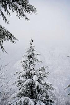 Foto vertical de um pássaro sentado no topo de uma árvore após uma nevasca
