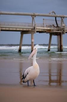 Foto vertical de um pelicano branco na praia com o cais