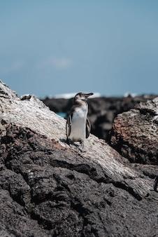 Foto vertical de um pequeno pinguim na pedra