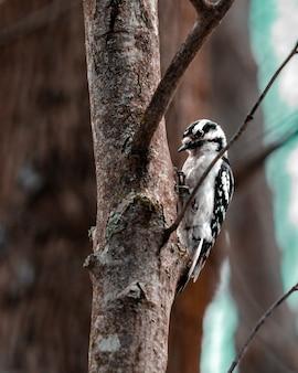 Foto vertical de um pica-pau em uma árvore