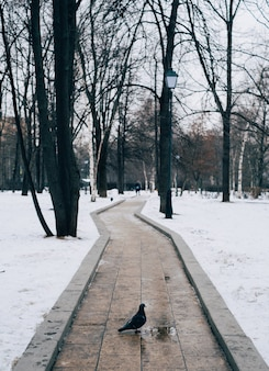 Foto vertical de um pombo parado em um caminho cercado por árvores durante o inverno