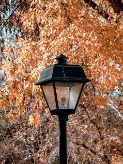 Foto vertical de um poste de luz e folhas de laranja