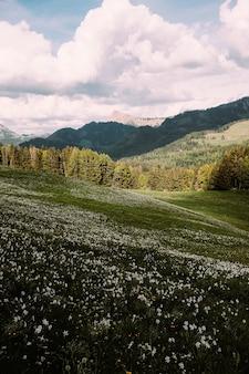 Foto vertical de um prado inclinado com montanhas ao fundo