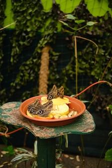 Foto vertical de um prato cheio de frutas com borboletas coruja rodeadas por vegetação