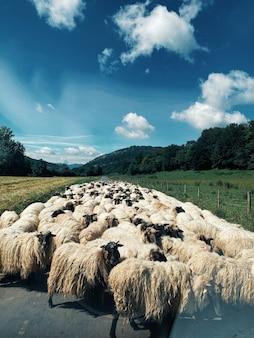Foto vertical de um rebanho de ovelhas no meio da estrada cercado por uma natureza verde