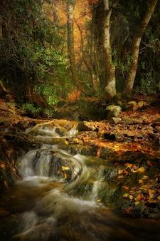 Foto vertical de um riacho fluindo no meio de uma floresta outonal