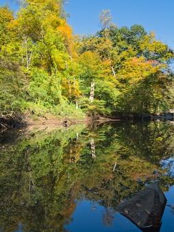 Foto vertical de um rio fluindo por entre árvores em uma floresta