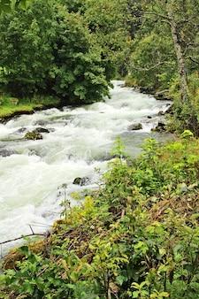 Foto vertical de um rio furioso cercado por belas árvores e plantas
