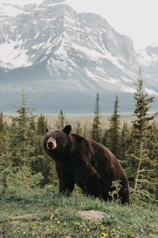 Foto vertical de um urso fofo andando em uma floresta cercada por montanhas