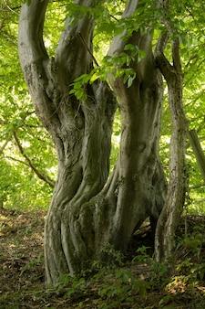 Foto vertical de um velho tronco de árvore cercado por folhas verdes durante o dia