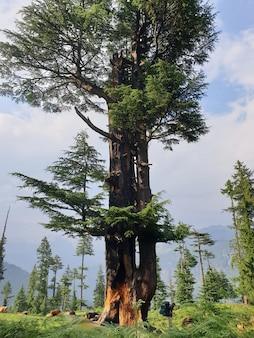 Foto vertical de um viajante em pé perto de uma árvore alta em uma floresta, apreciando a bela vista