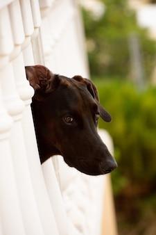 Foto vertical de uma adorável cara de cachorro marrom