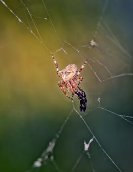 Foto vertical de uma aranha caçadora em sua teia