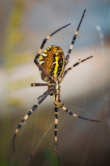 Foto vertical de uma aranha de jardim amarela em uma teia com um fundo desfocado