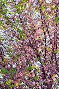 Foto vertical de uma árvore com lindas flores de cerejeira