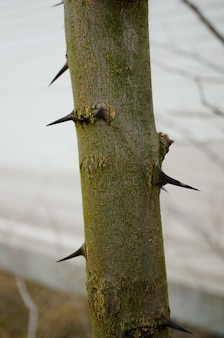 Foto vertical de uma árvore com pontas afiadas na superfície