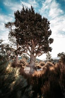 Foto vertical de uma árvore em uma área deserta sob um céu nublado