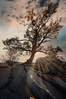 Foto vertical de uma árvore exótica no topo de uma rocha sob o céu nublado do pôr do sol