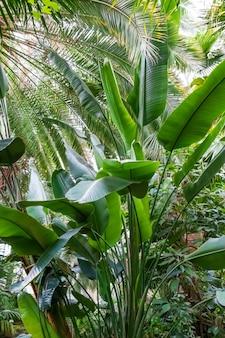 Foto vertical de uma bananeira cercada por outras árvores
