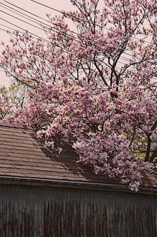 Foto vertical de uma bela árvore com flores de cerejeira rosa perto de um prédio