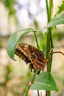 Foto vertical de uma borboleta marrom sentada em uma planta no jardim