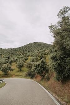 Foto vertical de uma estrada cercada por altas montanhas com grama e árvores