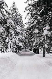 Foto vertical de uma estrada coberta de neve com pinheiros nas laterais