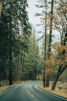 Foto vertical de uma estrada de concreto cercada por floresta