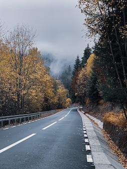 Foto vertical de uma estrada e árvores coloridas em uma floresta de outono