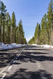 Foto vertical de uma estrada em uma floresta no inverno no parque nacional de yellowstone, eua