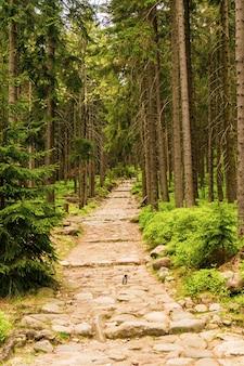 Foto vertical de uma estrada no parque com árvores altas durante o dia